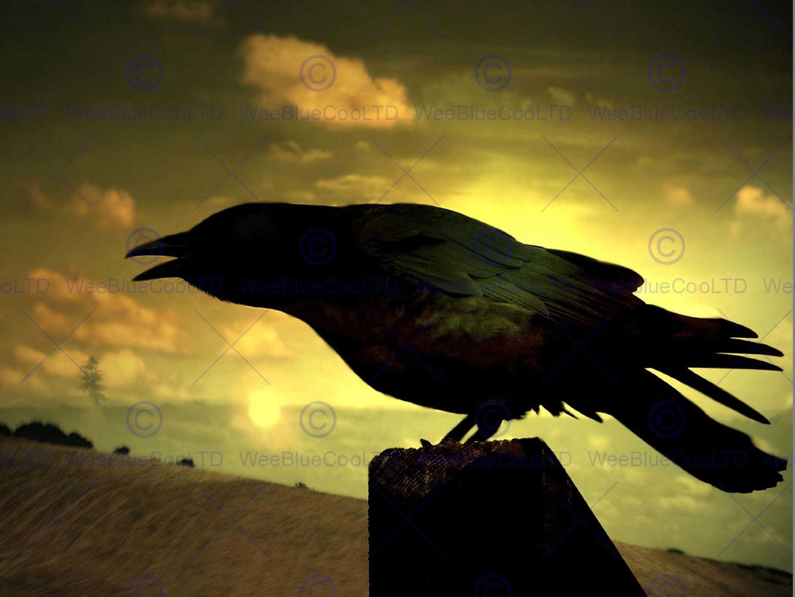 85501 NATURE RAVEN SILHOUETTE BLACK BIRD Decor WALL PRINT POSTER UK ...