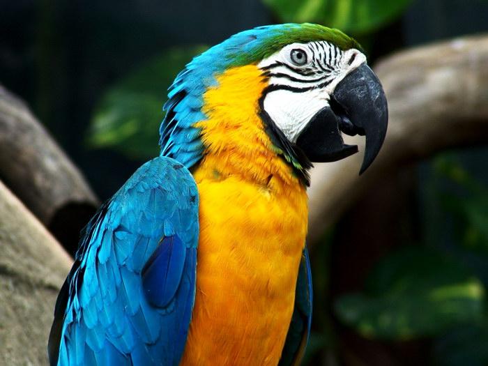D7912 Beautiful Parrot Colorful Bird Nature Animals Gigantic Print POSTER