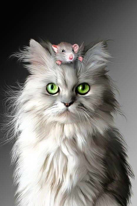 00581 CAT AND THE MOUSE ART IMAGE Wall Print POSTER CA