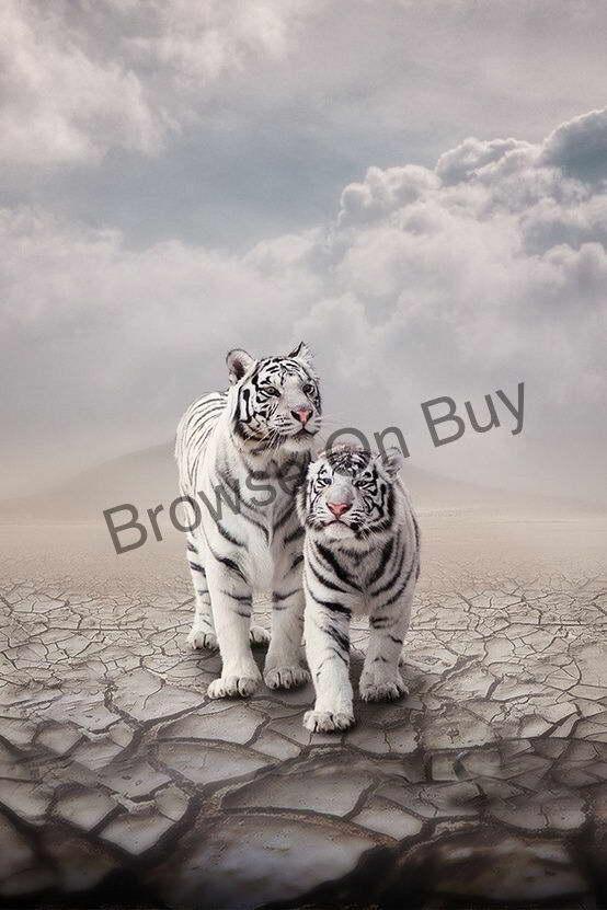 00627 bianca TIGERS CATS IMAGE Wall Print POSTER CA