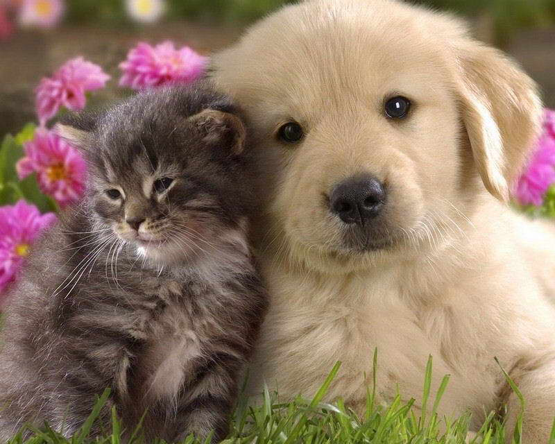 06245 KITTEN AND PUPPY PHOTO Wall Print POSTER CA