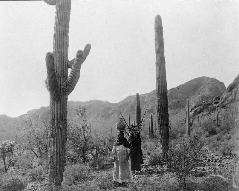 07877 Native Indian Hasen harvest Qahatika Three donna walking Print POSTER AU