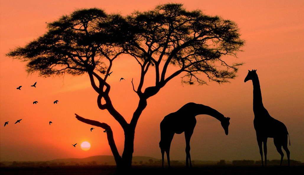 11486 Giraffe Wild Animals Africa Sunset Landscape Art Wall Print POSTER AU