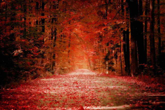 13125 Autumn Forest Path rosso Fallen Leaves Nature Art Wall Print POSTER CA
