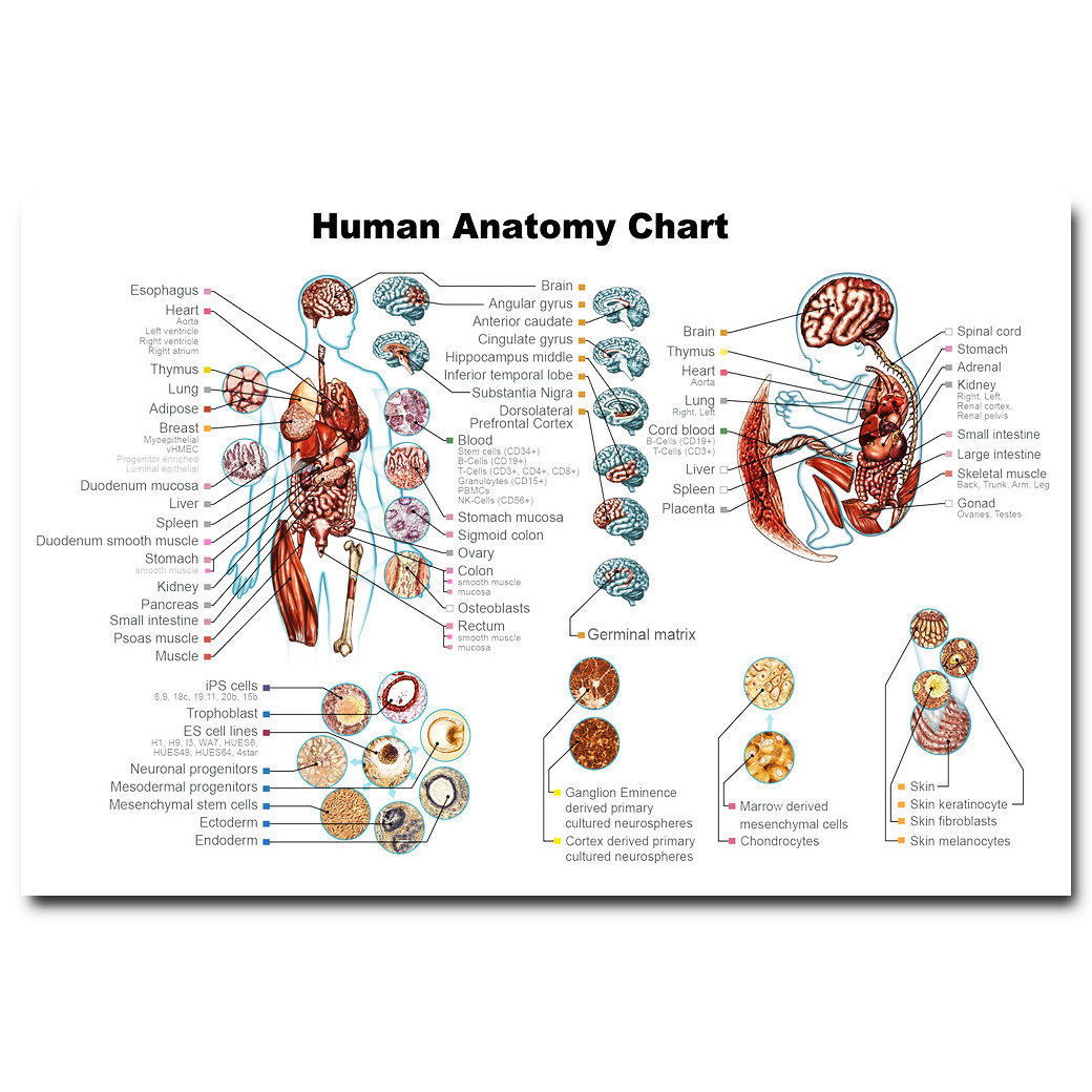 58852 Human Anatomy System Body Map Medical Science Wall Print