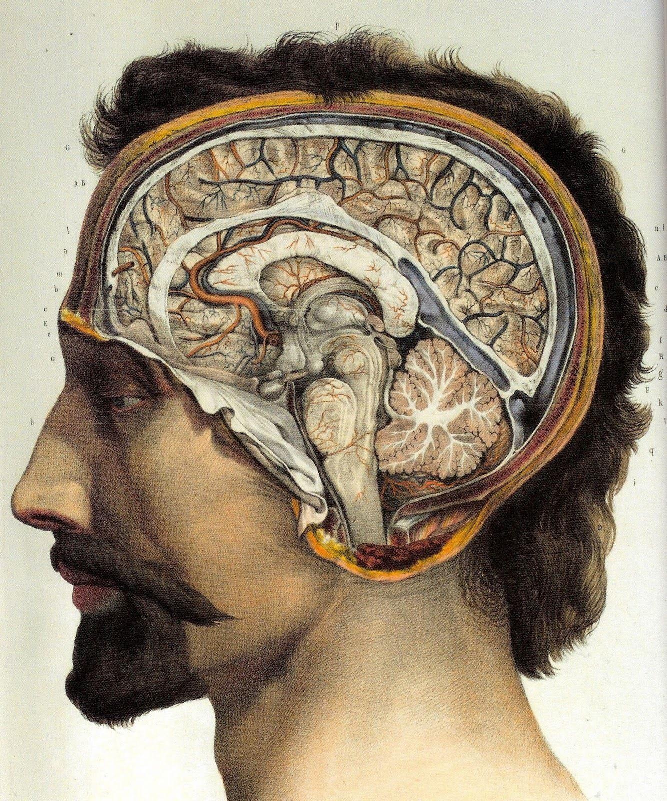 63569 Vintage 1800\'s Human Brain Surgical Anatomy Wall Print Poster ...