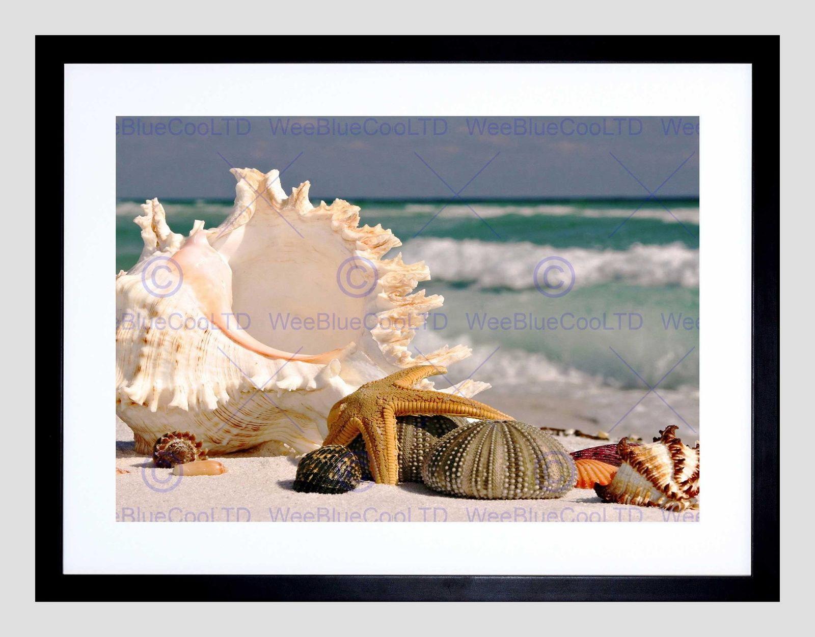85762 SAND CONCH SEASHELLS BEACH SUMMER SHELLS MOUNT Decor WALL PRINT POSTER CA