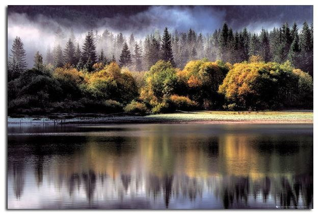 90322 Forest Autumn Colours Decor WALL PRINT POSTER CA