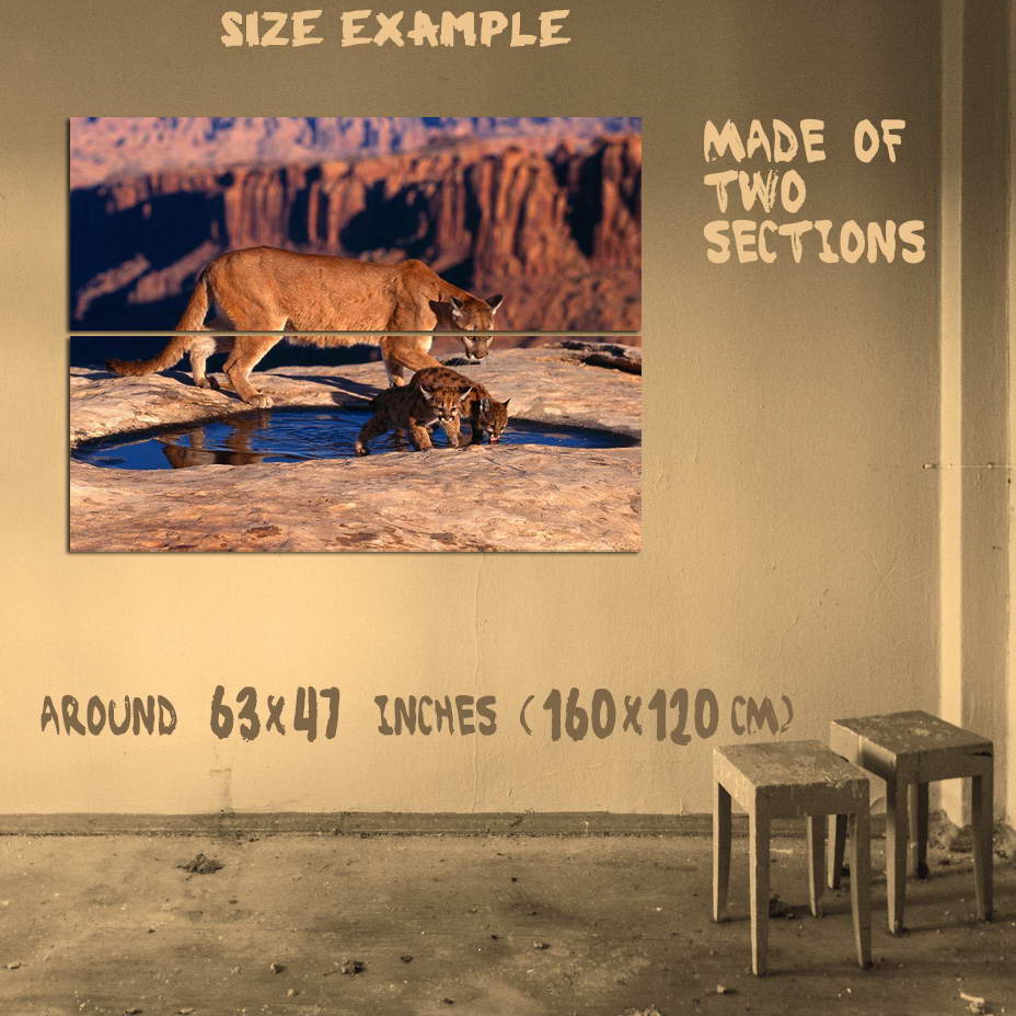 186459-COUGAR-W-CUBS-PUMA-MOUNTAIN-LIONS-CATS-PANTHERS-Wall-Print-Poster-AU