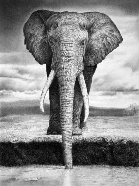 121208 Plastic 5mm watercolour Elephant Ready to hang Decor WALL PRINT POSTER AU