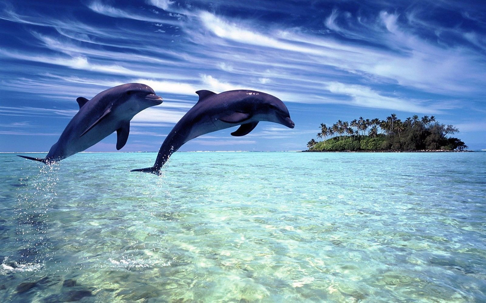 127484 Dolphins Decor WALL PRINT POSTER AU