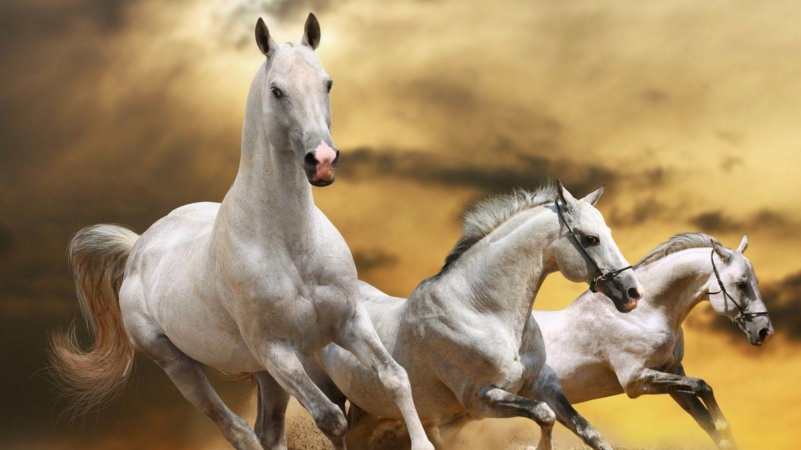 127522 Three Horses Decor WALL PRINT POSTER AU