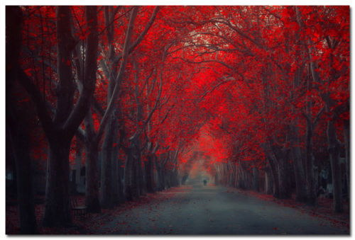 140941 Autumn Forest Path rot Tre Natur Photo Wand Poster Drucken CA