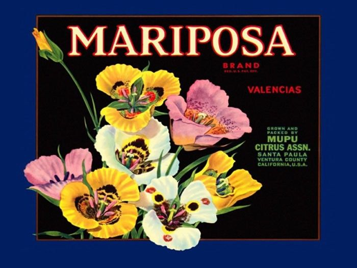 172298 Crate Label Mariposa Valencias Flowers Decor WALL PRINT POSTER CA