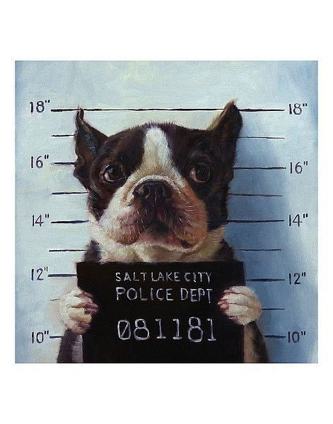 176402 Mug Shot Lucia Heffernan Funny Dog Salt Lake Cit WALL PRINT POSTER CA