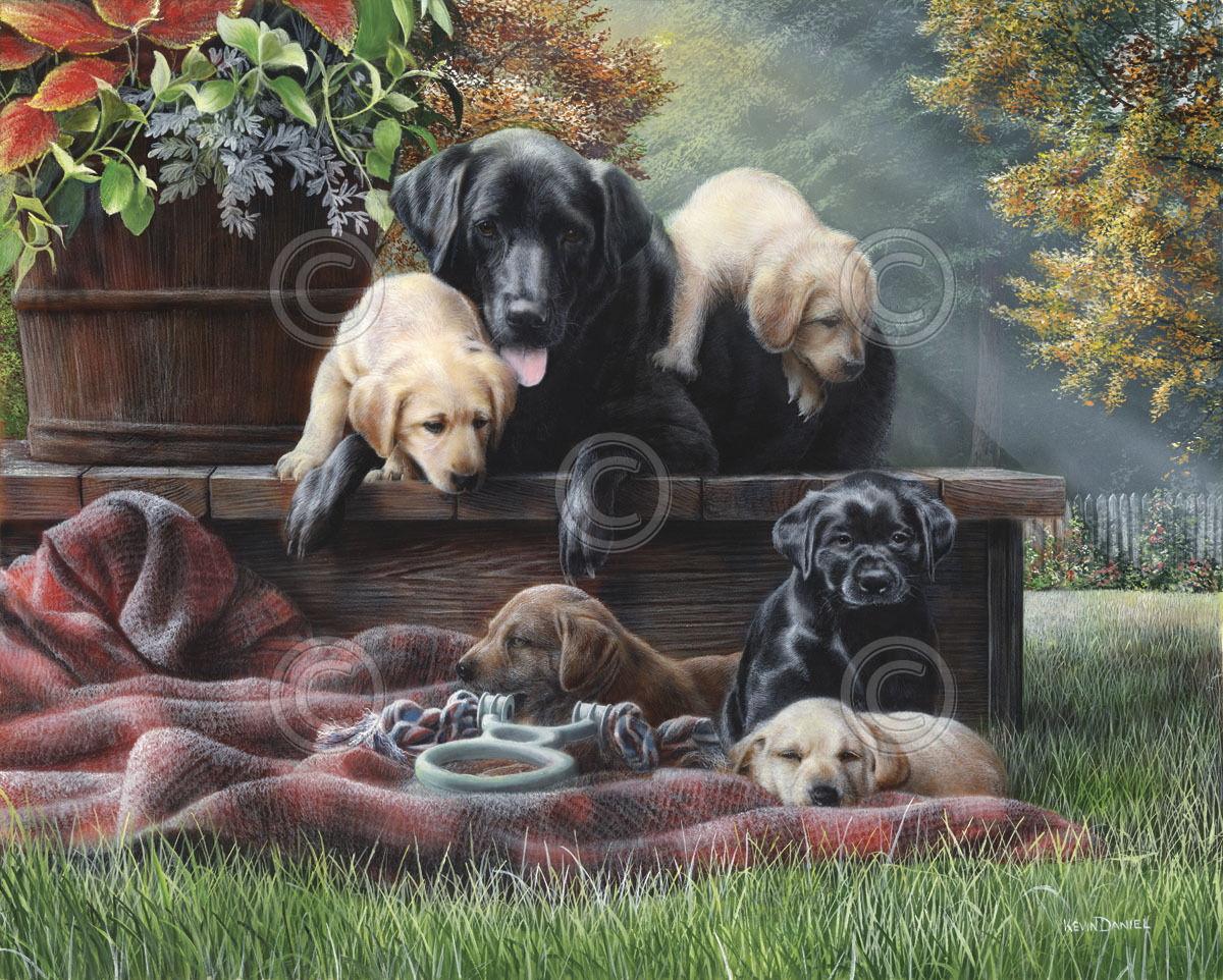 176708 DOG Cozy Moments by Kevin Daniel Lab Labrador Decor WALL PRINT POSTER AU