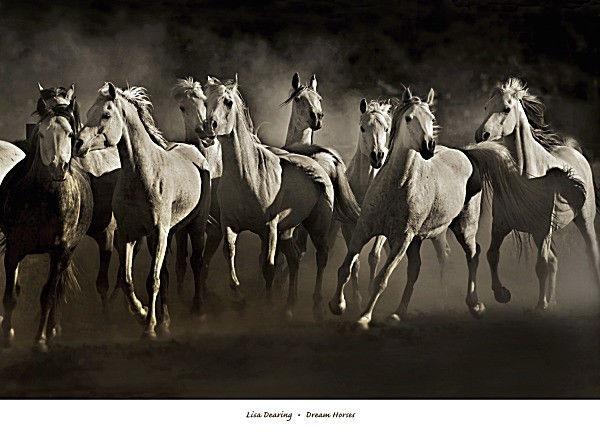 176946 Cavallo Cavalli da sogno by Lisa dearing Western cowbo parete Stampa Poster UK