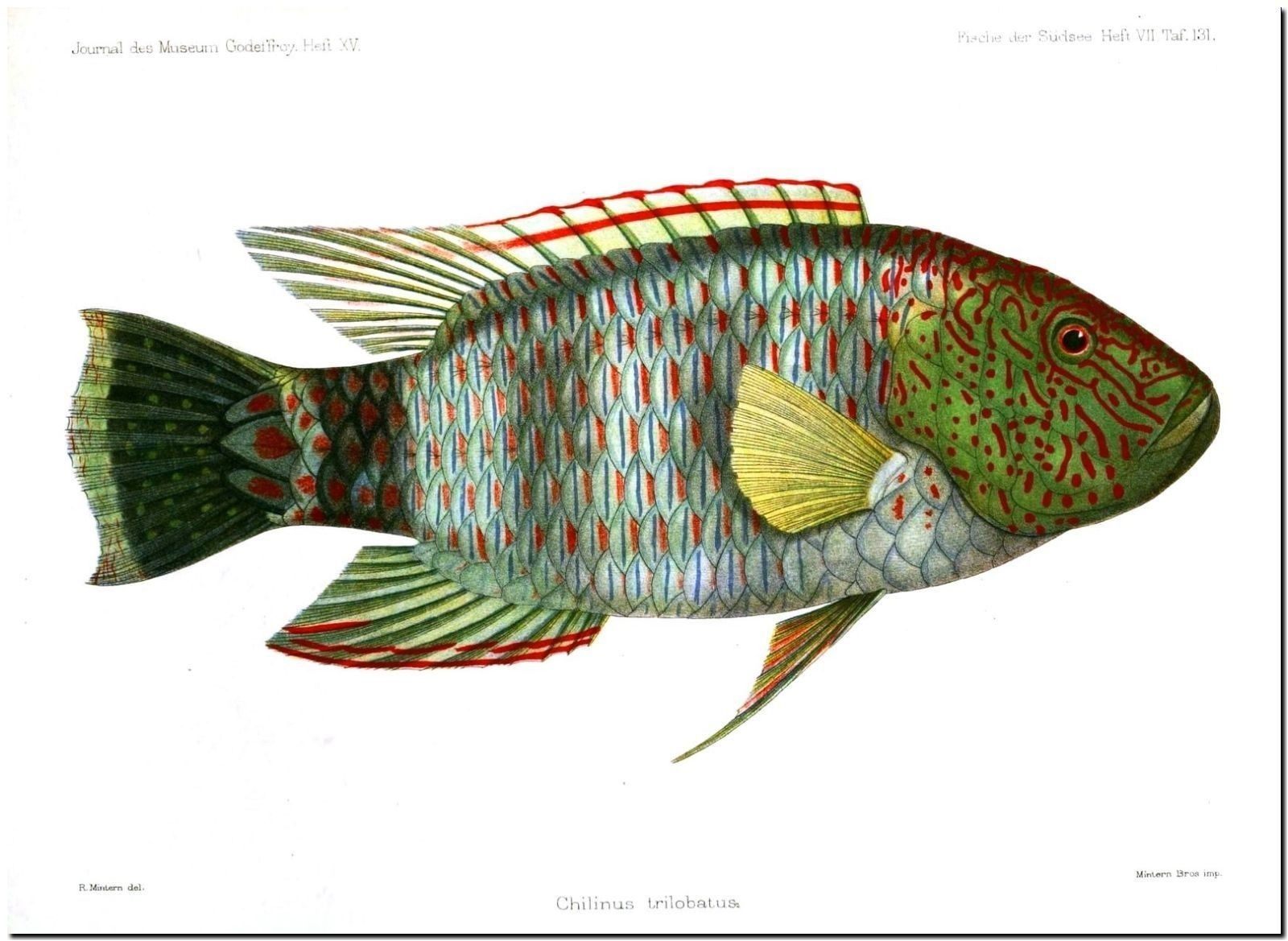 179216 Schön TROPICAL FISH DECOR Wand Drucken POSTER FR