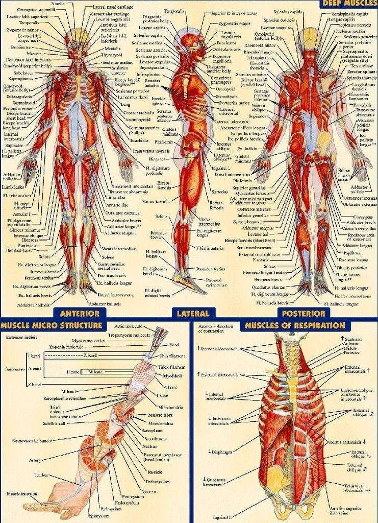 191554 Human Anatomy All System Body Map Wall Print Poster Uk Ebay