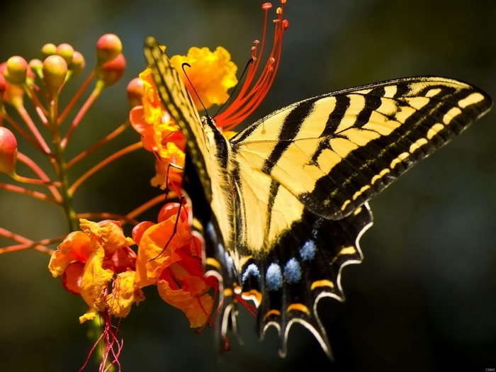 Butterfly Flower Amazing Insects Wall Print POSTER AU