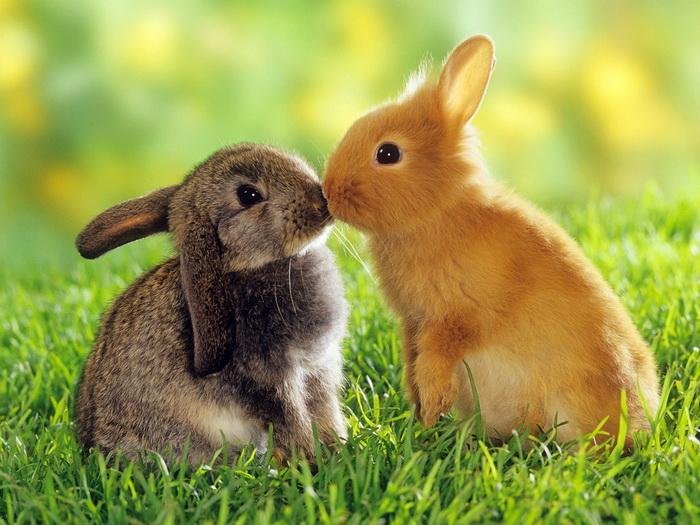 Cute Rabbits Kissing Nature Nature Nature Animal FRAMED CANVAS PRINT DE 70b7a8