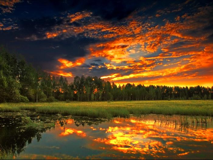 Swamp Sunset Forest Landscape Art Wall Print POSTER AU