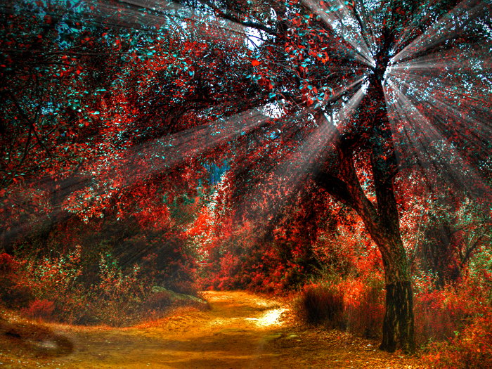 Autumn Forest Trees Sunlight Nature Art Wall Print POSTER AU