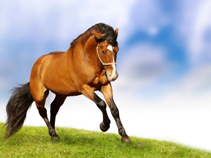 Horse Nature Animal Wall Print POSTER AU